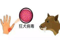 狂犬病是什么?狂犬病能治愈吗(100%死亡)