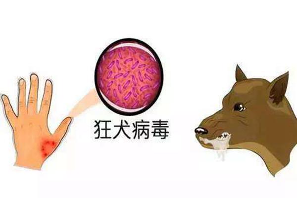 狂犬病是什么?狂犬病能治愈嗎(100%死亡)