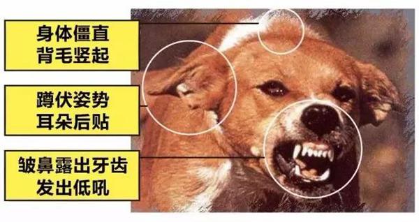 狂犬病的潛伏期是多久?狗咬了多久過安全期(幾天-幾年)