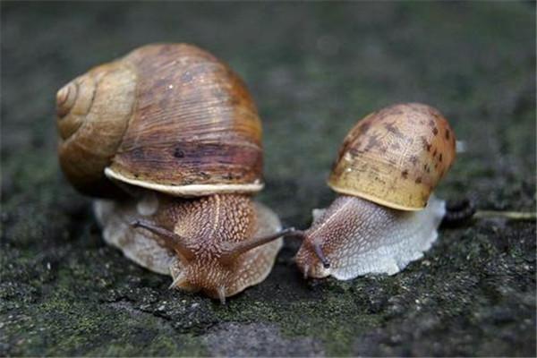 盘点三大雌雄同体的动物 它们的繁殖很有特点