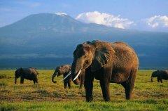 妊娠期最长的动物:大象怀孕22个月(小象生下就有120千克)