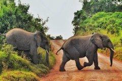 大象是怎么睡觉的:亚洲象是侧躺着睡觉(非洲象站着睡觉)