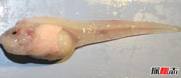 世界上最罕见的十大新物种:狮子鱼可承受700公斤压力