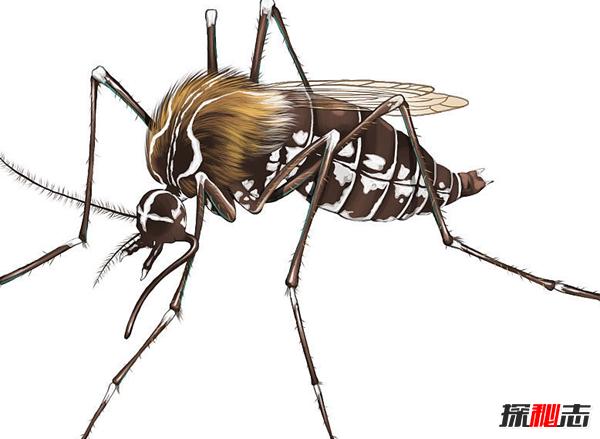 吸髓蚊存在吗?专门吸食人脑髓的吸髓蚊(杜撰不存在的生物)