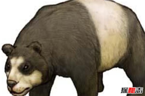 什么是始熊猫?以食肉为主的最早的熊猫(大熊猫的祖先)