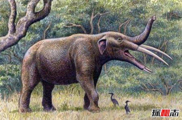 恐象现如今已经灭绝了,存在于中新世中期到更新世早期,主要分布在亚洲,非洲,和欧洲等地方。 它的上颚并没有獠牙,下颚有一对很大的向下弯的獠牙,嘴巴里面有简单的横向脊骨,主要是将杆物给切割掉,而獠牙大多是用 来挖掘植物的根或者将树皮给剥去。  在长鼻类进化历史的早期,还分化出一类形态很特殊的旁支,这就是恐象(deinotherium)。和其他长鼻类一样,恐象也有一段史料空白期。中新世它一开始出现便已相当特化,而且自此以后直至更新世期间它完全消失,形态上除体躯增高增大外,几乎没有变化。这类象是长腿的长鼻类,站立