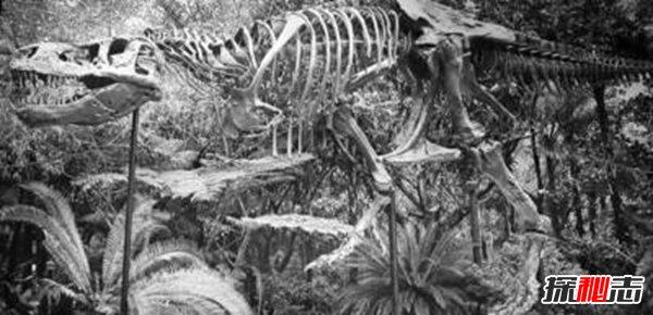 喀左中国暴龙vs霸王龙, 喀左中国暴龙可能是霸王龙的祖先