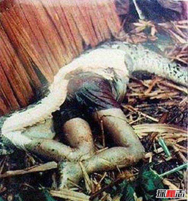 长白山3000年巨蛇,七彩蛇遍布山峰