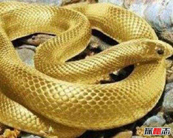 河南蛇变成龙真实事件,蟒蛇渡劫失败灰飞烟灭