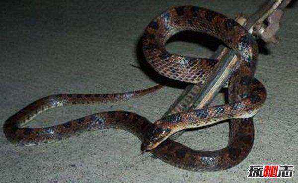 中国八三年蛇灾是怎么回事?有人专门买蛇放生