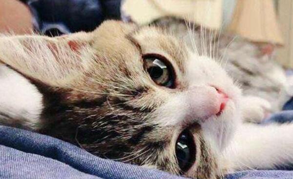 猫智商相当于人几岁图片
