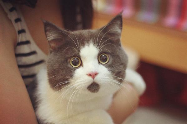 2岁猫换主人后会怎么样图片