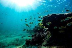 实心铁球能沉到海底吗?小于1毫米的铁粉也能沉(密度大)
