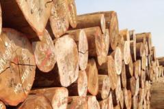 世界最硬的木头:比钢铁还要硬上一倍(密度极高)