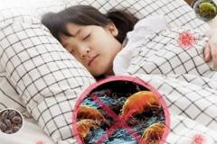 床上除螨虫的最快方法:暴晒和60度水洗 能杀死90%螨虫