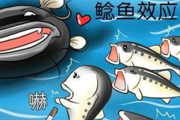 鲶鱼效应告诉我们什么道理?引进鲶鱼型人才激发竞争插图1