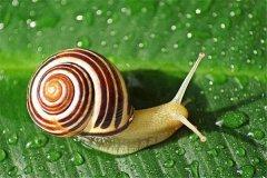 蜗牛养久了会认主人吗 养蜗牛时需要注意什么
