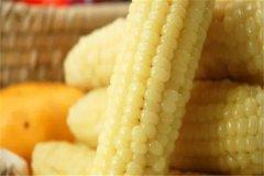 糯玉米热量是多少:150大卡左右(200克)