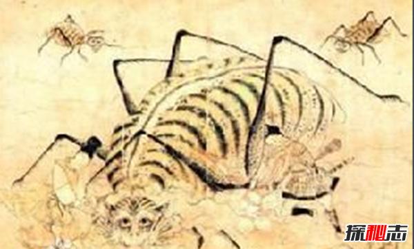 中国古代神兽山蜘蛛,性格残暴体型庞大(蛛丝能止血)