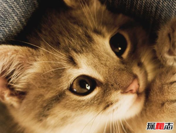 看过来!新手养猫要注意什么,猫的十种特殊举动含义