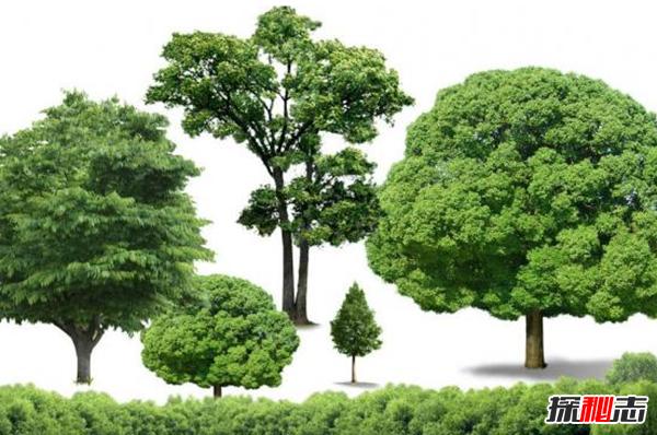 刷新你三观!世界上有哪些奇怪的树?世界上12种最奇怪的树