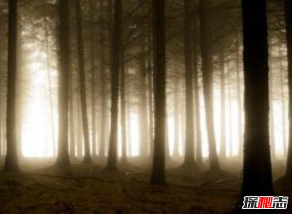 不安!森林里面有什么?15件森林发现的令人毛骨悚然的东西