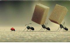 蚂蚁有文明吗?蚂蚁能否感知到人类文明(没有媒介)