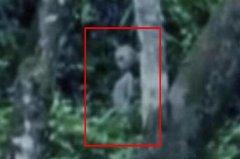 巴西亚马逊外星人事件 作家科恩以此视频拍摄电影