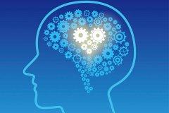 头脑最发达的哺乳动物:人类,人脑能储存100万亿条信息