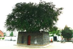 世界上最小的城:仅10平方厘米(境内只有一棵桑树)