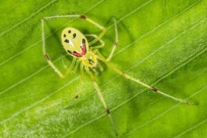 世界上最罕见的动物,蜘蛛带笑脸/鸟有四个翅膀/猫有双面
