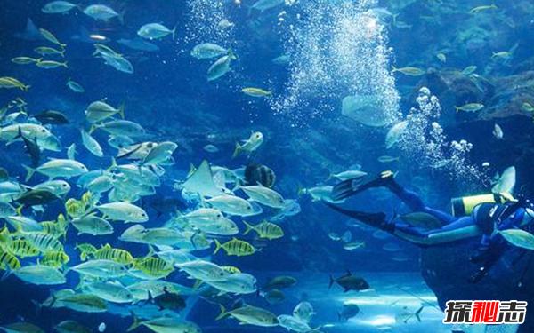 海洋太可怕!海洋深处的十大恐怖秘密