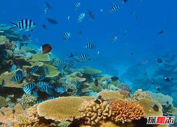 海底到底有多恐怖?海底十大神秘物体发现