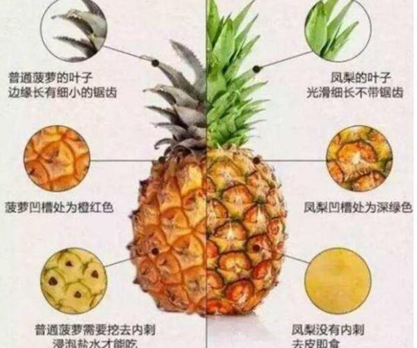 凤梨是不是菠萝?为什么凤梨比菠萝贵很多