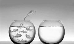 金鱼缸效应的启示 企业管理当中讲究透明公开