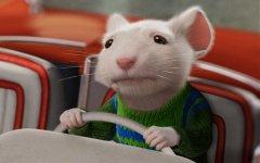 为什么用小白鼠做实验?小白鼠做实验的原因有哪些