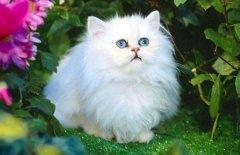 猫系男生是什么样的?女生会喜欢猫系男生吗