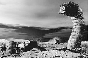 蒙古死亡之虫:毒液可使人体腐烂,体长达五米(图片)