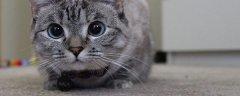 猫反应速度是人的几倍?