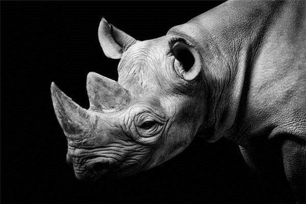 灰犀牛事件是什么图片