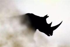 灰犀牛事件是什么意思?灰犀牛一词出自于哪里