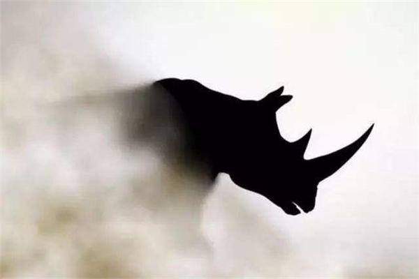 灰犀牛事件是什么意思是指什么图片