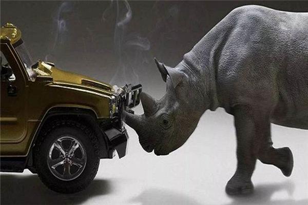 灰犀牛事件特点图片