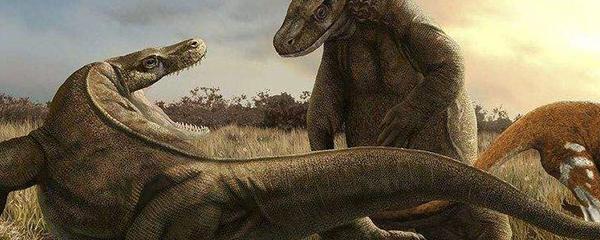 古巨蜥澳洲魔龙图片图片