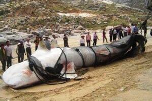 15米巨型哲罗鲑图片,纯属传闻(实为新疆的大红鱼)
