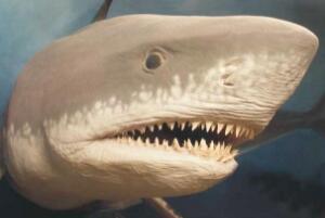 牙齒(chi)最(zui)多的(de)動物排(pai)名,蝸牛有25600顆牙齒(chi)/鯊(sha)魚一生換牙2萬多顆