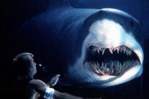 世界上牙齒(chi)第二(er)多的(de)動物,鯊(sha)魚5000多顆(一生換牙2萬多顆)