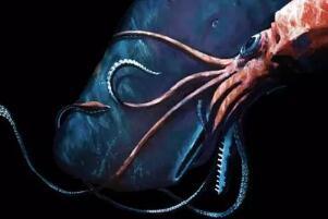 六种海底恐怖图片,抹香鲸大战大王乌贼/尖牙鱼掉什么吃什么