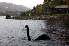 尼斯湖水怪 从未被真正证实过的生物只传闻中出现
