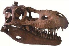 艾伯塔爪龙:靠着吃白蚁为生的恐龙(生存在晚白垩世)